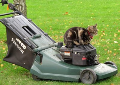 I Can Help Mow if you Like