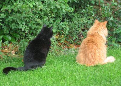 Kobi & Amber