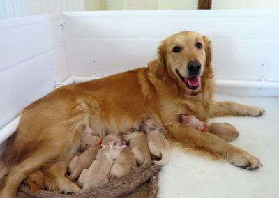 Momma Ella & her Puppies
