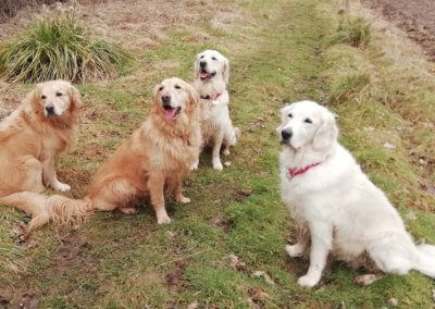 Bailey, Ella, Poppy and Molly