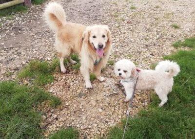 Bailey and Harley