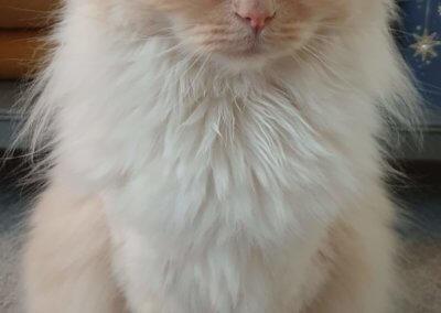 Feline Poppy