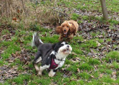 Luna and Maisie