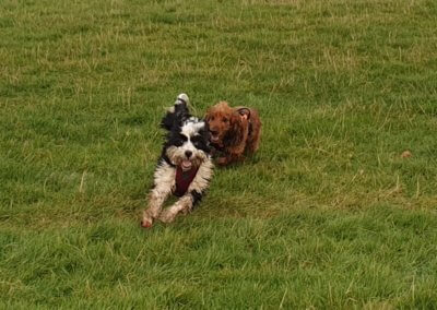 More frolics for Maisie and Luna