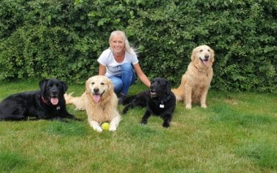 What to Consider when Choosing a Dog Walker